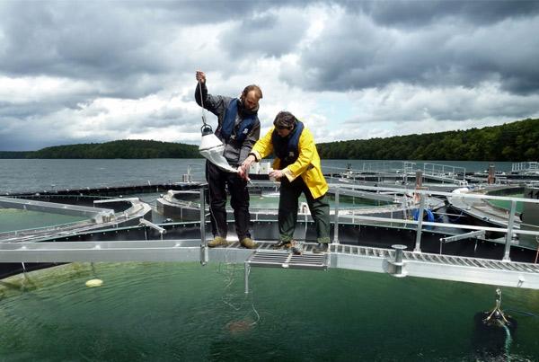Assessment of plankton communities in lake mesocosm